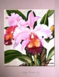 Cattleya 'Norman's Bay