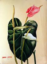 Barbara Everard 1947 watercolour of Anthurium spp 1947