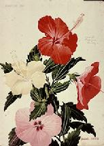 Barbara Everard watercolour of Hibiscus var