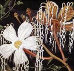 Barbara Everard watercolour of Hodsonia heteroclita detail