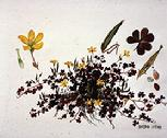 Oxalis corniculata watercolour by Barbara Everard