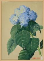 Watercolour painting of Hydrangea