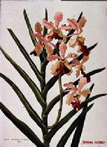 Barbara Everard 1950 watercolour of Vanda Josephine von Brero