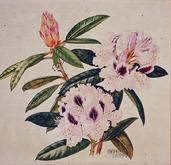 Barbara Everard watercolour of Rhodendron 'Sappho'