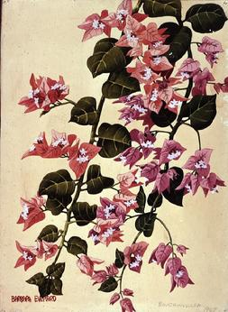 Barbara Everard (1949) watercolour Bougainvillea